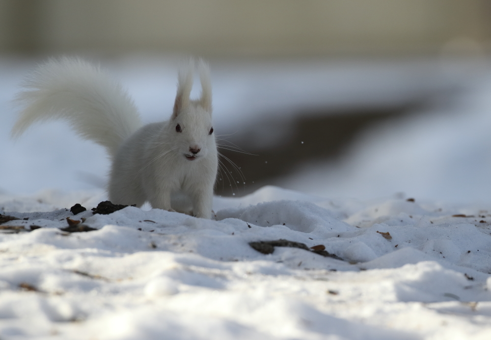 0631 アルちゃん雪はね
