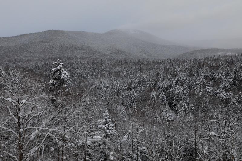 6481  着雪した。樹海