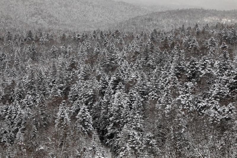 6488 着雪した樹海