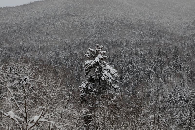 6492 雪化粧の樹海