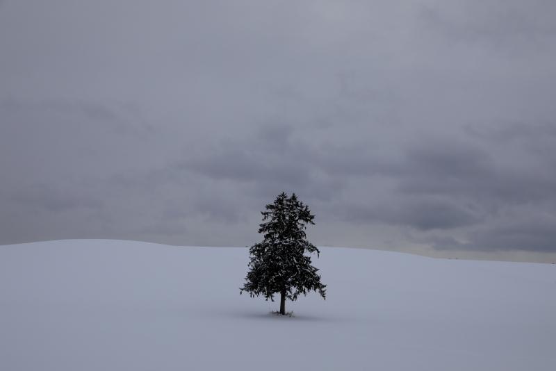6512 一本の木