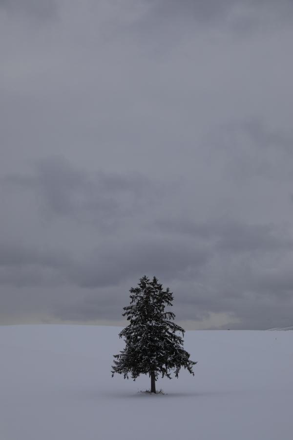 6523 一本の木