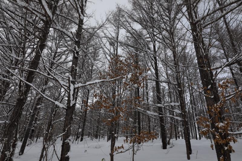 6538 冬の林