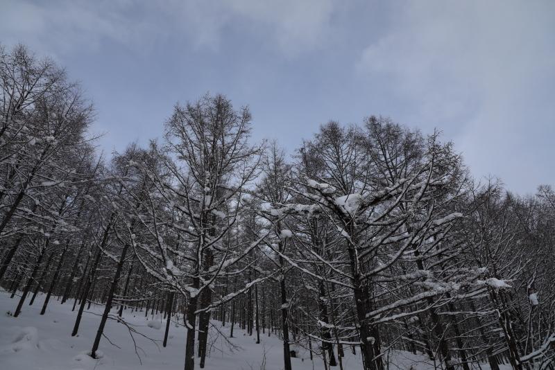 6544 冬の林