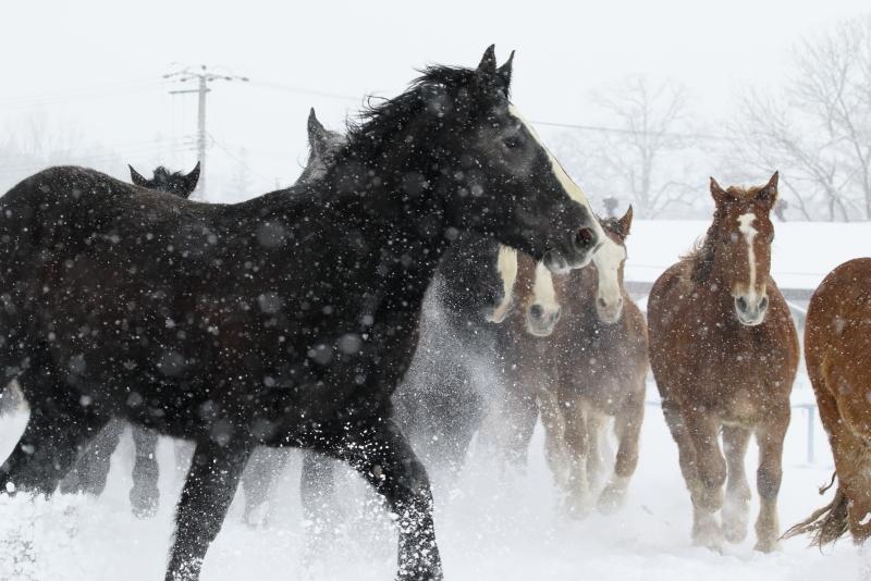 2696 雪の日の馬追い
