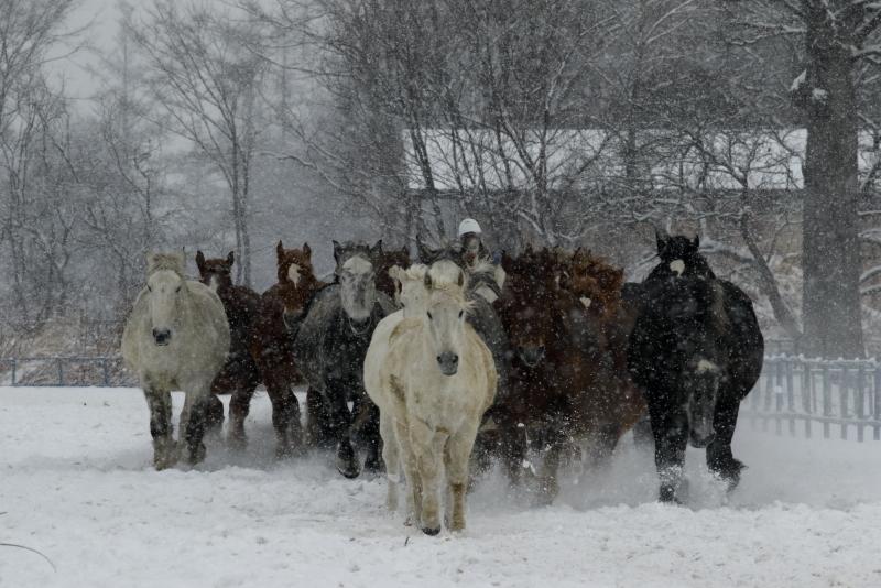 2812 雪の日の馬追い