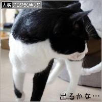 dai20190213_banner.jpg