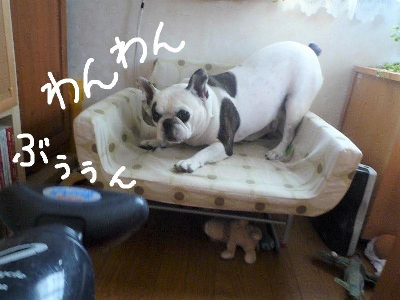 にこら201011to201108 257