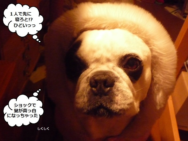 にこら201011to201108 661