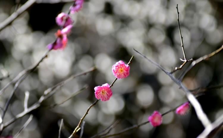 190204umejiro013.jpg