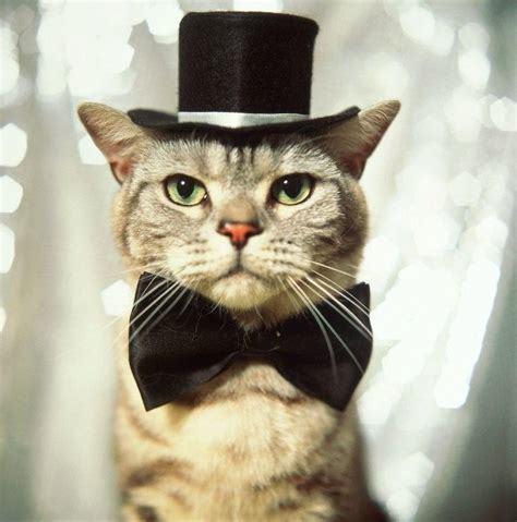 1203りりしい正装猫