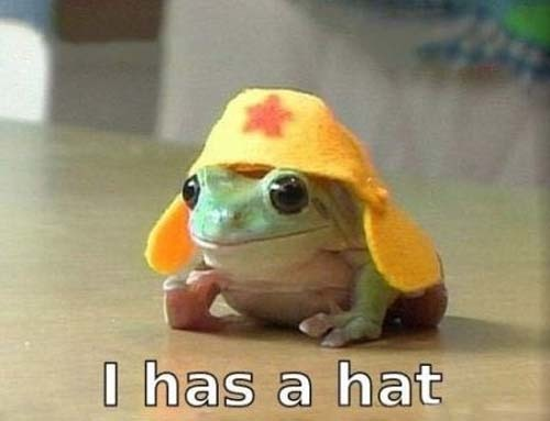 1203frog-wearing-a-hat