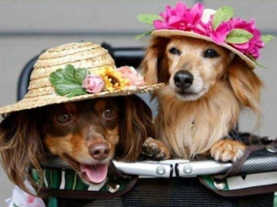 1203dog-with-hat-101
