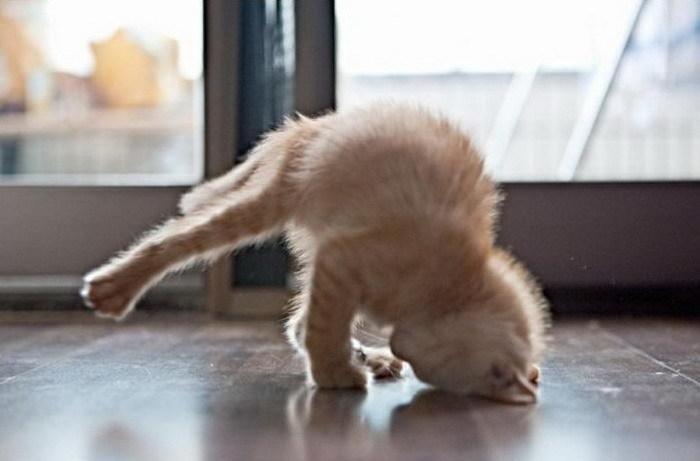 1210breakdancing-kitten-big