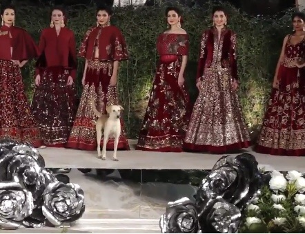 【モデルのキャットウォークとドッグウォーク】インドのムンバイで開かれたファッションショーに野良犬がドッグウォークで参入