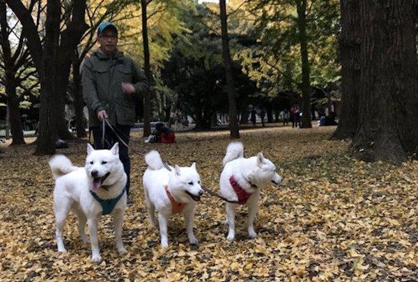 2017.11.4 代々木公園