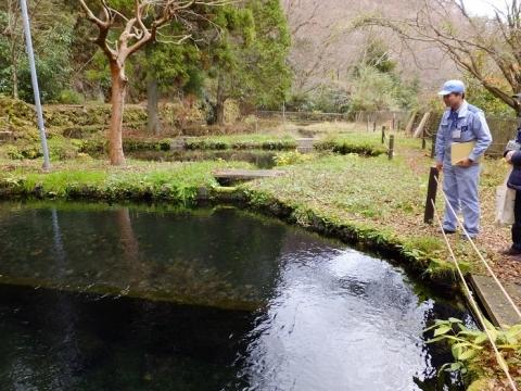 水土野水源内、旧淡水魚増殖池
