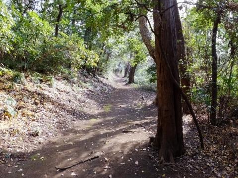 勝坂遺跡公園散策路