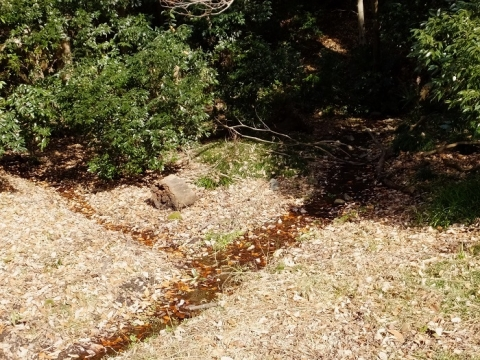 有鹿の泉北側から湧き出す泉