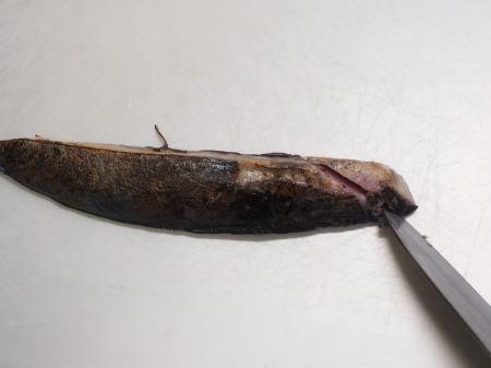 スマガツオの炙り刺身051