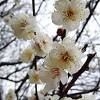 Aichi's blog