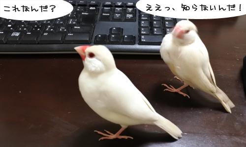 ぴのしゃんのパソコン教室_1