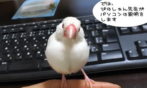 ぴのしゃんのパソコン教室_2
