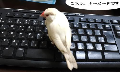 ぴのしゃんのパソコン教室_3
