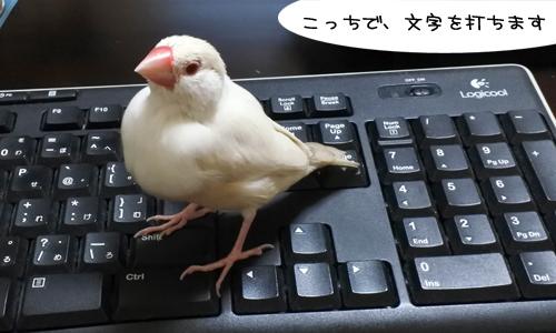 ぴのしゃんのパソコン教室_4