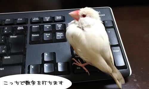 ぴのしゃんのパソコン教室_7
