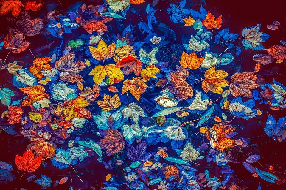 fall-leaves-3744649_960_720 フリー写真