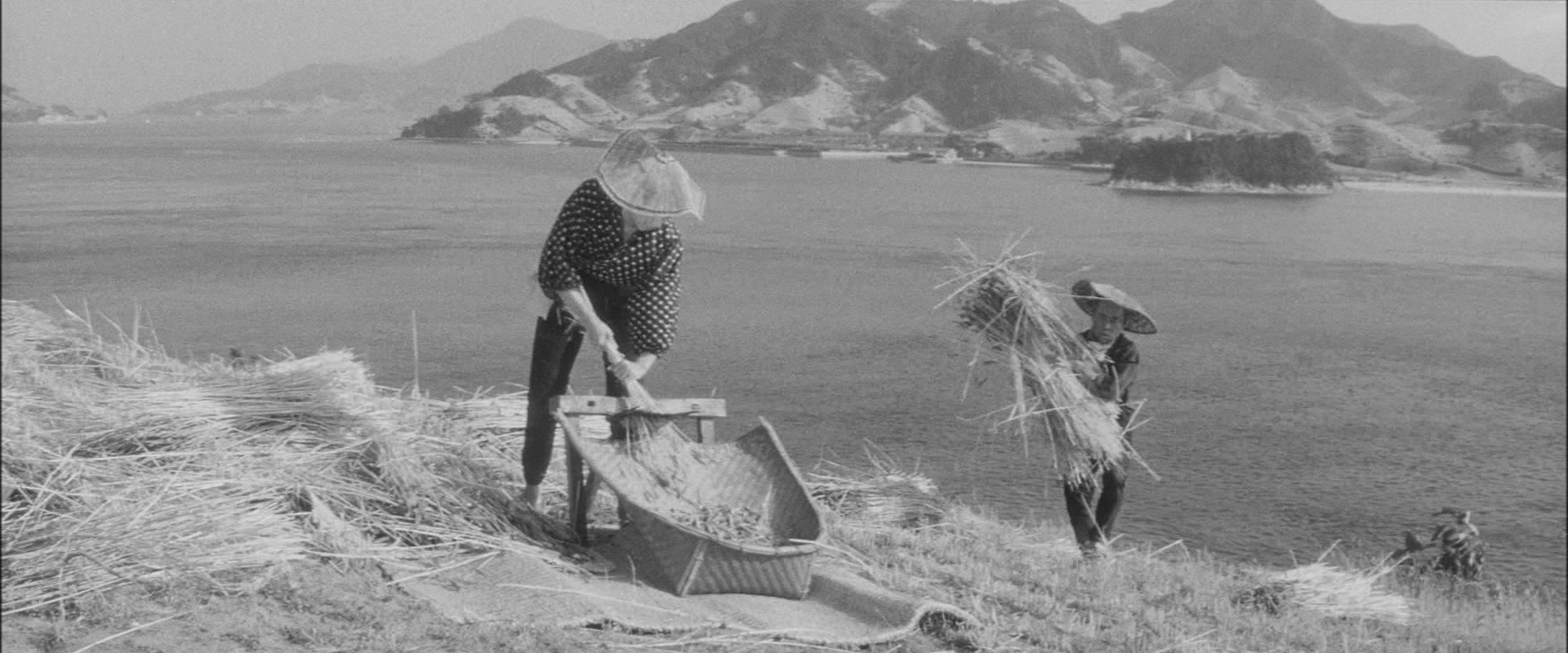 『裸の島』収穫