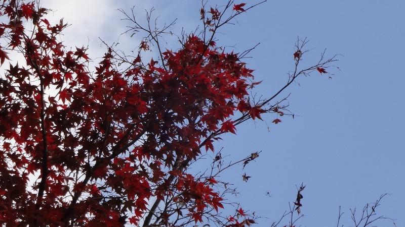 太鼓谷の紅葉