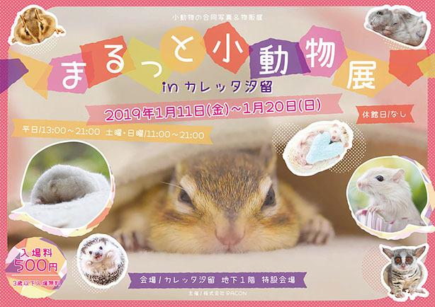 まるっと小動物展inカレッタ汐留_Ys