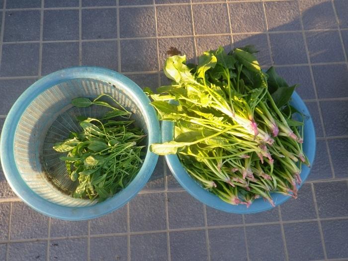 収穫4_19_02_23