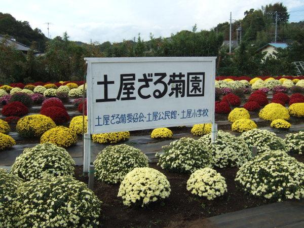 ざる菊園パノラマ02