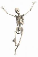 skeleton-2504341_640.jpg