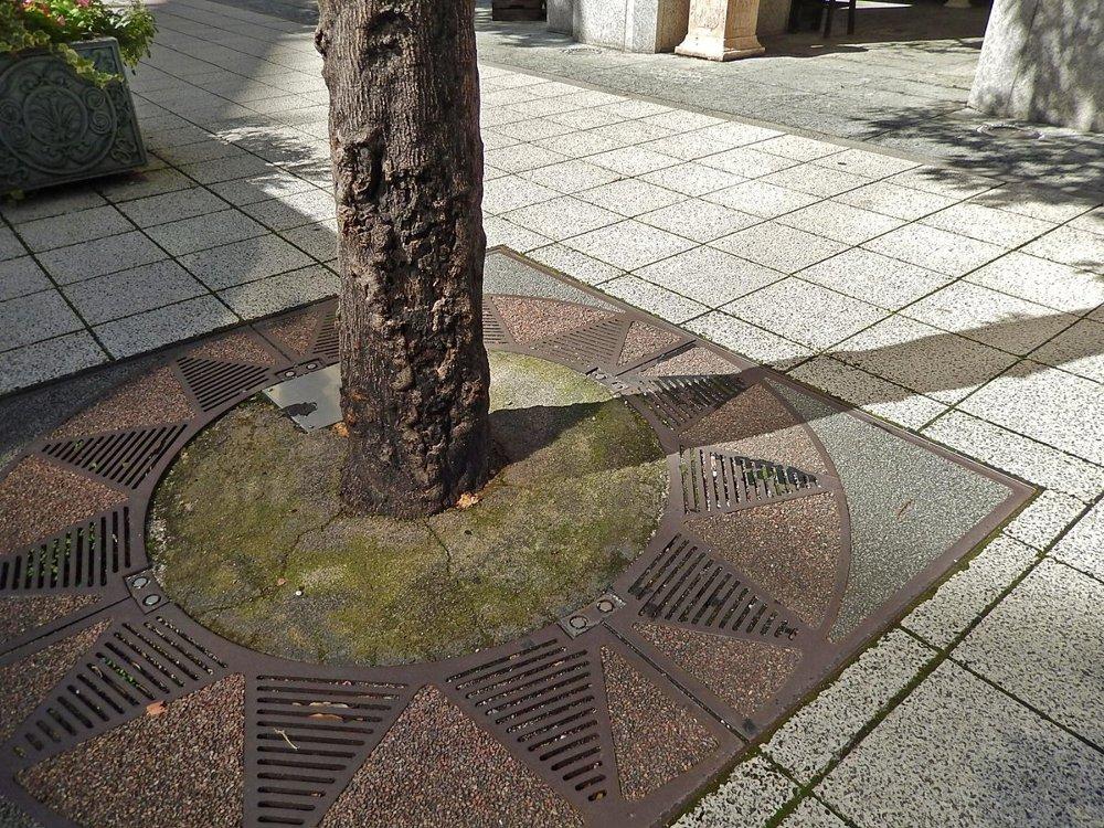 街のきのこ123街路樹のきのこ