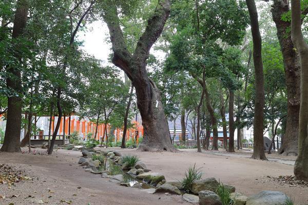 生田の森神木