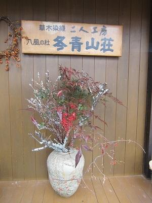 19.2.15猫柳入り (2)-1