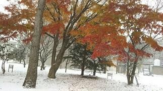 北大紅葉と雪