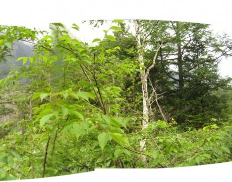 岳沢口湿原3