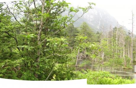岳沢口湿原1