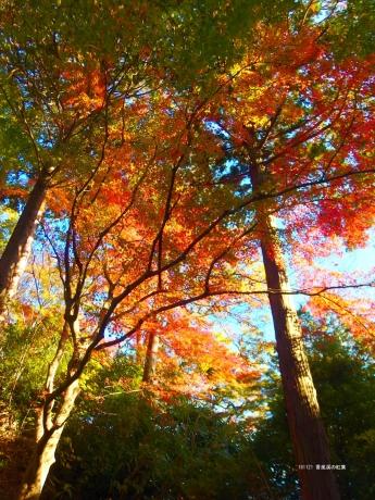 香嵐渓の紅葉1