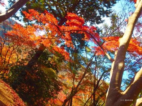 香嵐渓の紅葉2