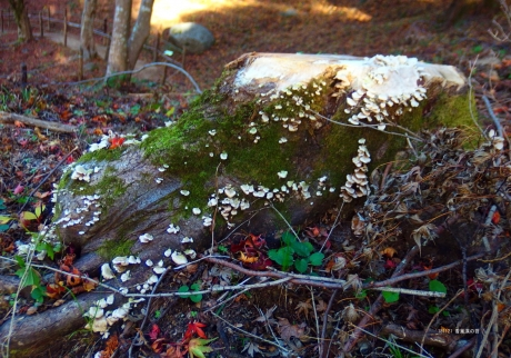 香嵐渓の苔
