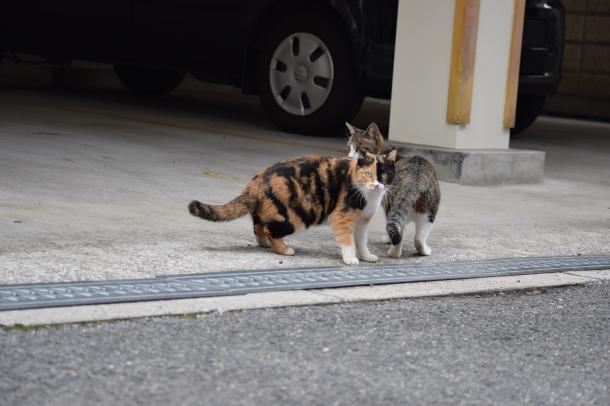 猫33,34