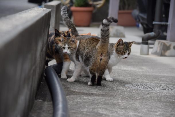 猫33,34,35,36