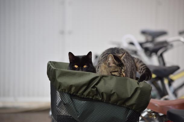 猫23,24