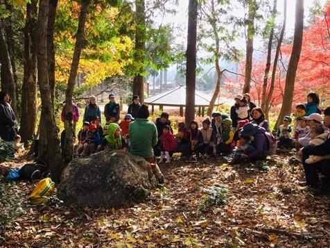 いびこだぬき1・秋の森